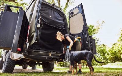 TIPS FOR VAN LIFE DOGS